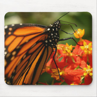 Colorful Orange Monarch Butterfly Photo Mouse Pad