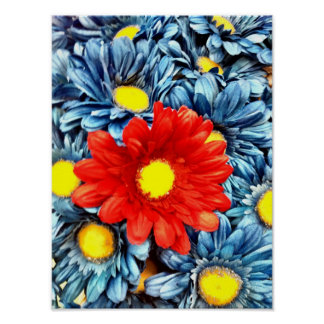 Colorful Orange Red Blue Gerber Daisies Flowers Poster