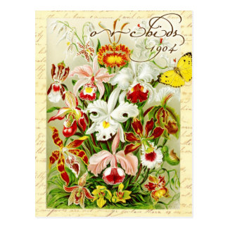 Colorful Orchids and yellow butterfly Postcard