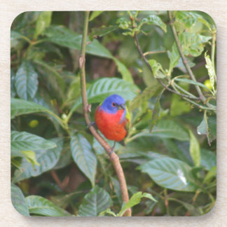 Colorful Painted Bunting Bird Drink Coaster