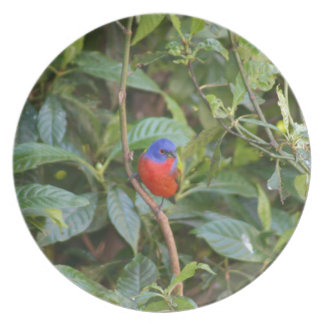 Colorful Painted Bunting Bird Melamine Plate