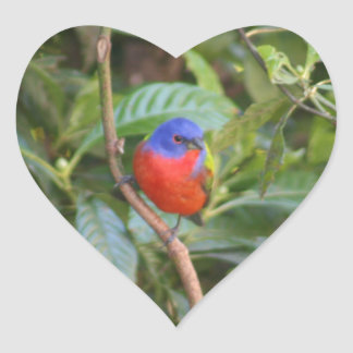 Colorful Painted Bunting Bird Heart Sticker