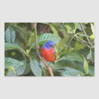 Colorful Painted Bunting Bird Rectangle Sticker