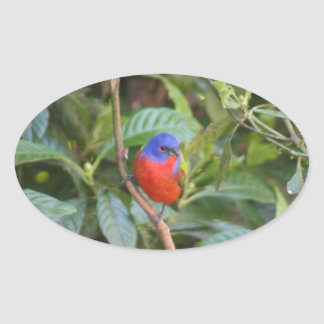 Colorful Painted Bunting Bird Stickers