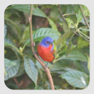 Colorful Painted Bunting Bird Square Sticker