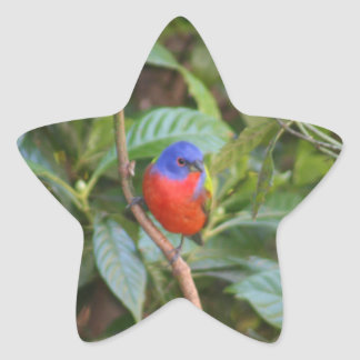 Colorful Painted Bunting Bird Star Stickers