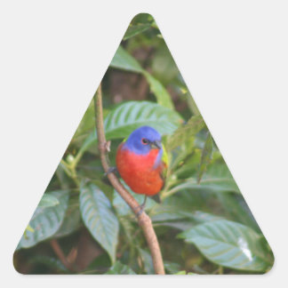 Colorful Painted Bunting Bird Sticker
