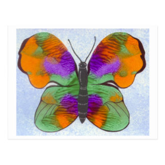 Colorful Painted Butterfly Postcard