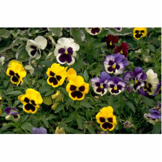 Colorful pansy flowers standing photo sculpture