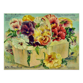 Colorful Pansy Flowers Vintage Seed Packet Cover Poster