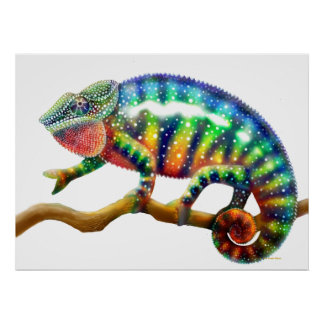 Colorful Panther Chameleon  Print
