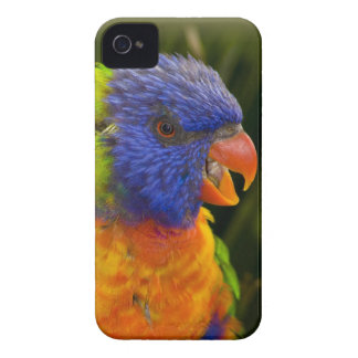 Colorful parakeet Case-Mate iPhone 4 cases