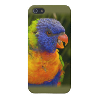 Colorful parakeet cover for iPhone SE/5/5s