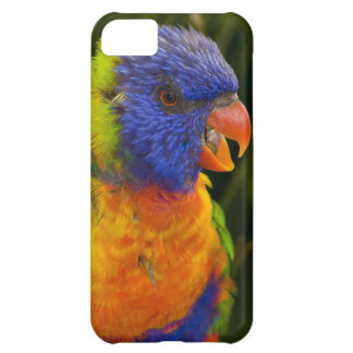 Colorful parakeet iPhone 5C covers