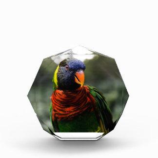 Colorful Parakeet Mug Shot Awards