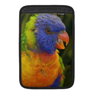 Colorful parakeet sleeve for MacBook air