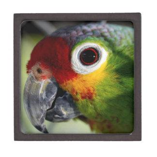 Colorful Parrot Photo Premium Gift Box