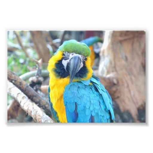 Colorful parrot - Photo Print