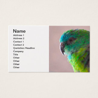 Colorful-parrot-plumage707 PARROT BIRD EXOTIC TEAL Business Card