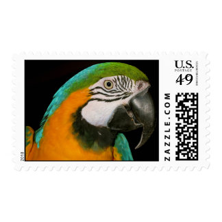 Colorful Parrot Portrait Postage Stamp