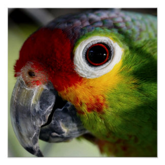 Colorful Parrot Poster Posters