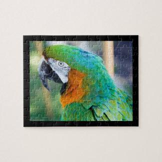 parrot puzzles parrot jigsaw puzzles