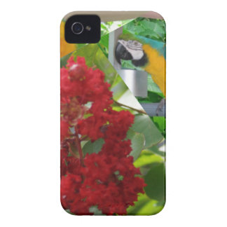 Colorful parrots enjoy looking at each other Case-Mate iPhone 4 case