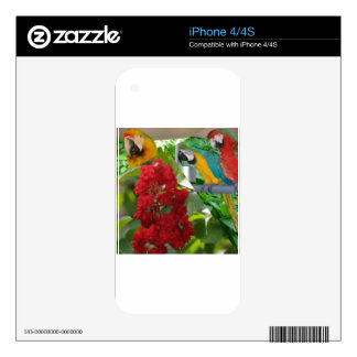 Colorful parrots enjoy looking at each other iPhone 4 skins