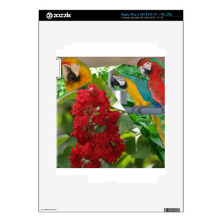 Colorful parrots enjoy looking at each other skin for iPad 3