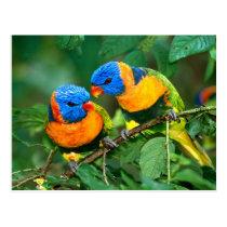 Colorful Parrots Postcard