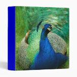Colorful Peacock Binder