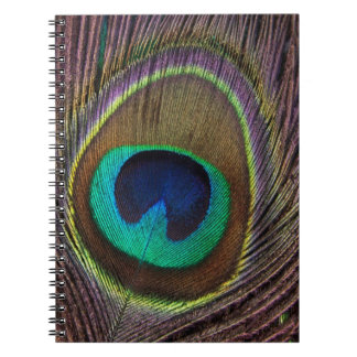 Colorful Peacock Feather Personalized Notebook