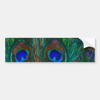 Colorful Peacock Feathers Etching Style Bumper Sticker