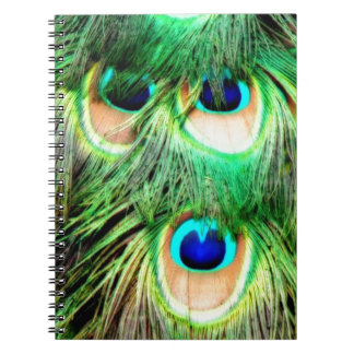 Colorful peacock feathers notebook