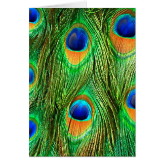 Colorful Peacock Feathers Print Cards