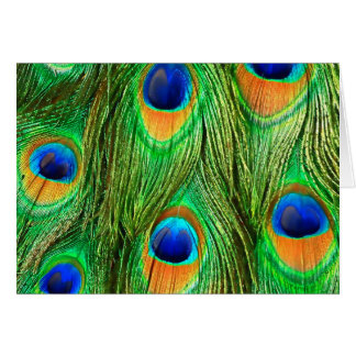 Colorful Peacock Feathers Print Greeting Cards
