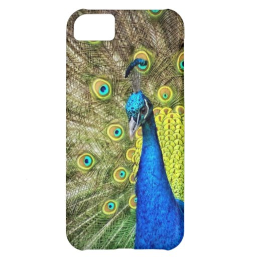 Colorful peacock iPhone 5C cover