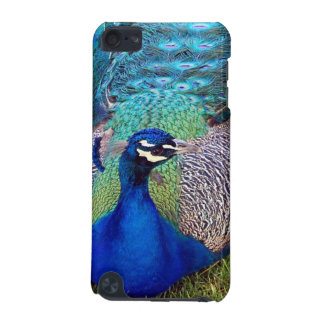 Colorful Peacock iTouch Case iPod Touch (5th Generation) Covers