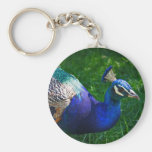 Colorful Peacock Key Chains