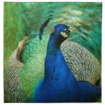 Colorful Peacock Set of Four Napkins