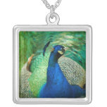 Colorful Peacock Sterling Silver Necklace