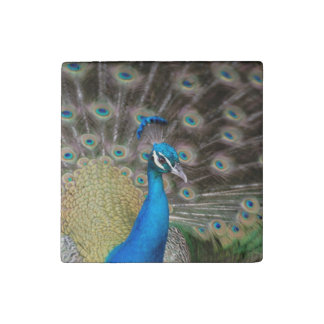 Colorful Peacock Stone Magnet