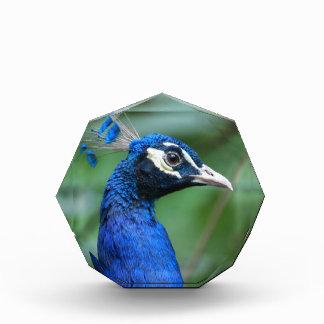 Colorful Peafowl Award