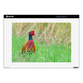 Colorful pheasant rooster upright in green meadow decal for laptop