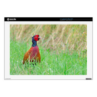 Colorful pheasant rooster upright in green meadow laptop decal