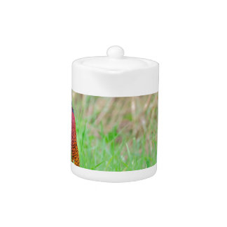 Colorful pheasant rooster upright in green meadow teapot