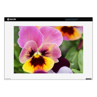 "Colorful Pink and Yellow Pansy Flower Decal For 15"" Laptop"