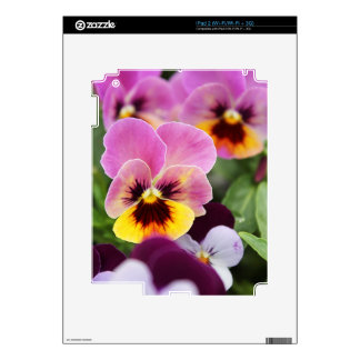 Colorful Pink and Yellow Pansy Flower iPad 2 Decal