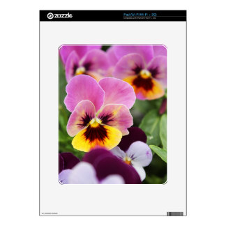 Colorful Pink and Yellow Pansy Flower iPad Skin