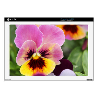 Colorful Pink and Yellow Pansy Flower Laptop Decal